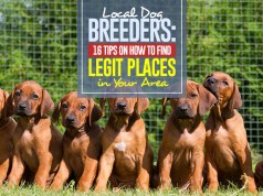 How to Find and Pick Local Dog Breeders in Your Area