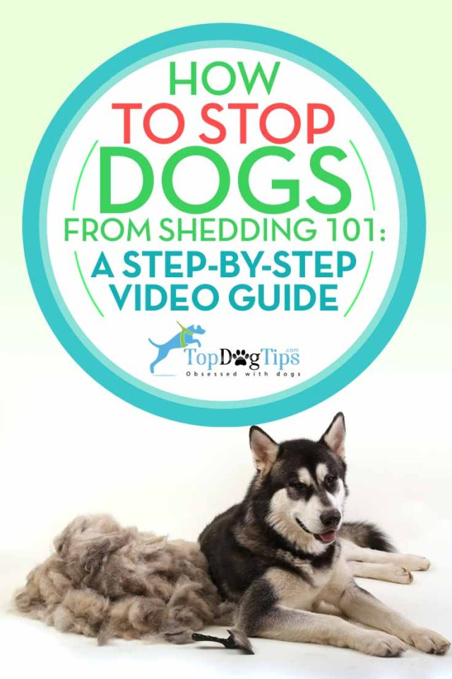 How to Stop Dogs from Shedding - A Step by Step Guide