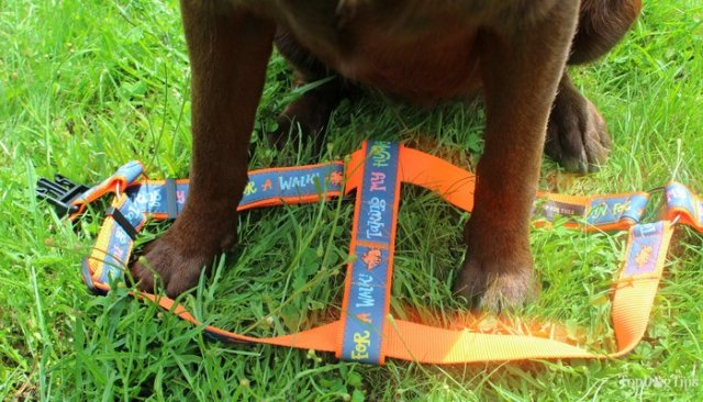 How to put on a step-in dog harness on your pet