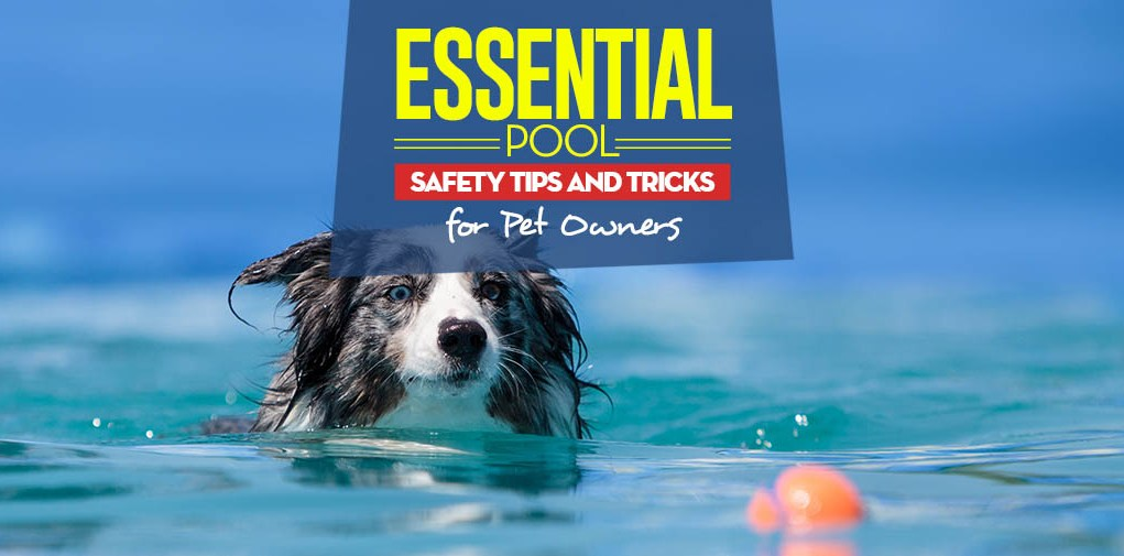 The 7 Pool Safety Tips for Cats and Dogs