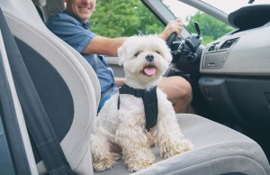The Best Car Cooling Fans for Dogs