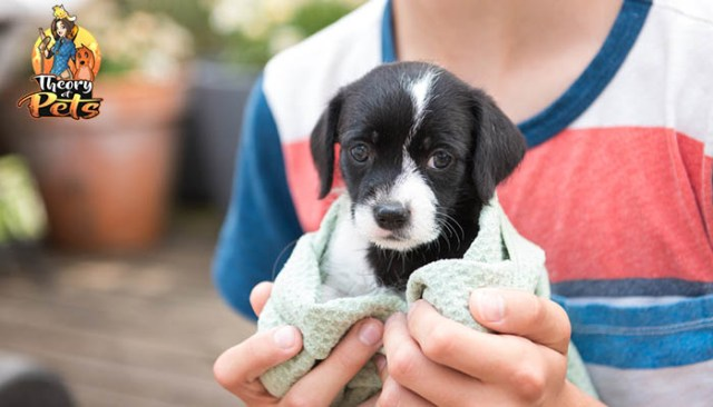Tips for Bringing Home A Newly Adopted Pet