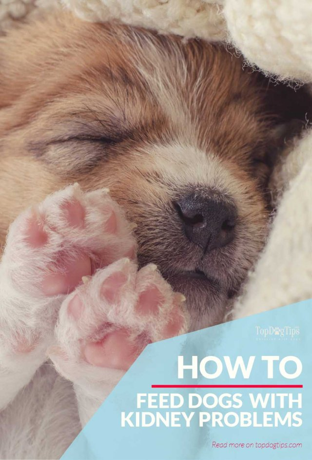 Tips for Renal Diet for Dogs