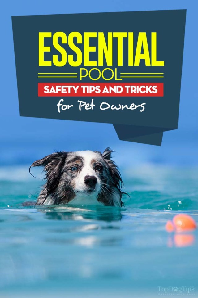 Top 7 Pool Safety Tips for Pet Owners