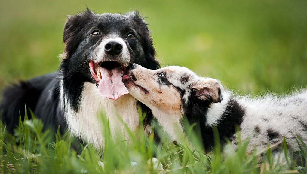 12 Reasons Senior Dogs Are Better Than Puppies