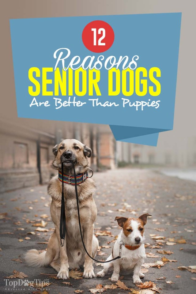 12 Reasons Why Senior Dogs Are Better Than Puppies