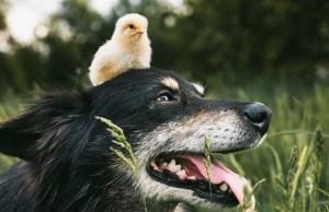 12 Vegan-friendly Dog Products
