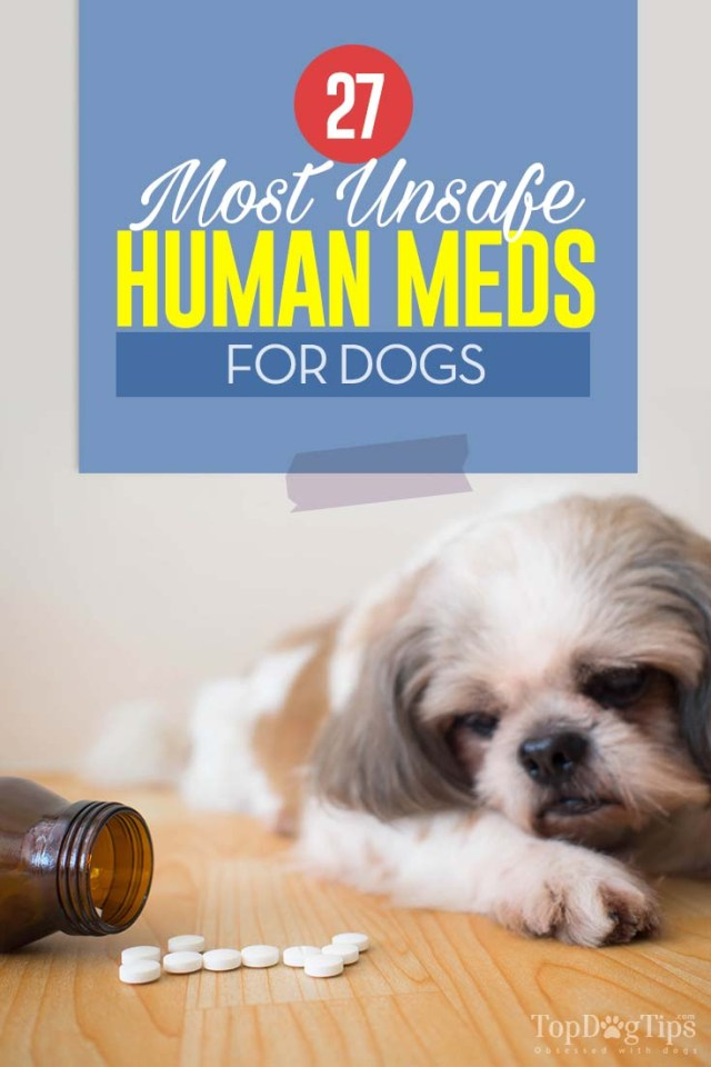 27 Most Unsafe Human Medicine for Dogs