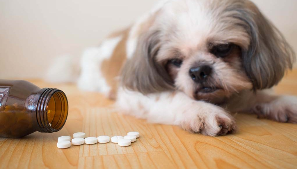 27 Unsafe Human Medicine for Dogs