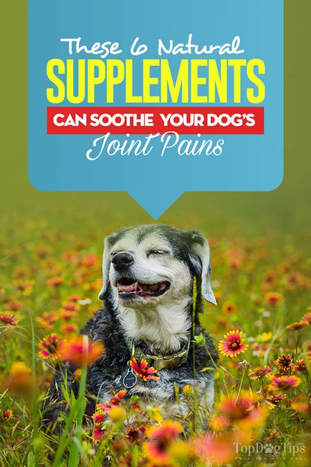 6 Natural Supplements to Soothe Your Dog's Joint Pains