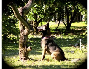 """A trained dog is """"researching"""" a tree to detect disease."""
