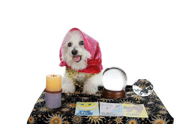 Consult a Pet Psychic