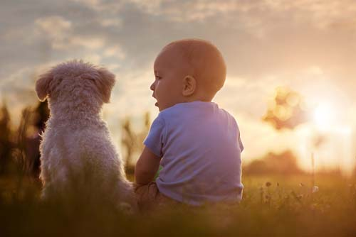 Daily Life of Dogs and Babies Together