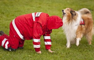 Human Encouragement Boosts Problem-solving Skills In Dogs, Study Says
