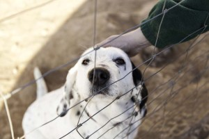 Improved Animal Advocacy