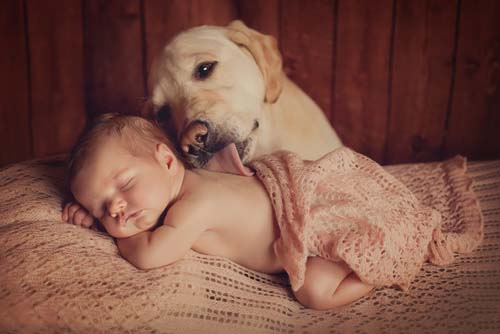 Introductions Between Newborns and Dogs