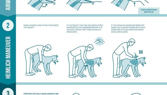 Learn CPR for Dogs