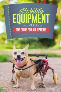 Mobility Equipment for Dogs - The Ultimate Guide
