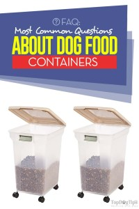 Most Common Questions About Dog Food Containers
