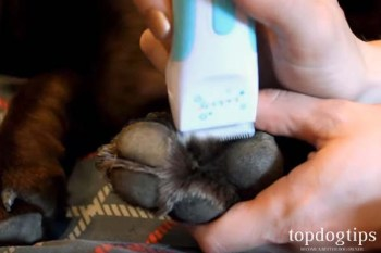 Now Remove the Hair from a Dog's Paws