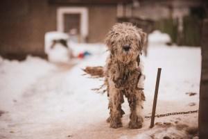 Outside Dogs