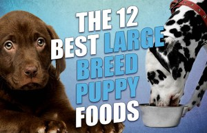 Top 12 Best Large Breed Puppy Foods