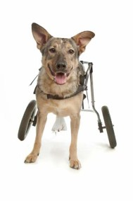 The Guide on Mobility Equipment for Dogs