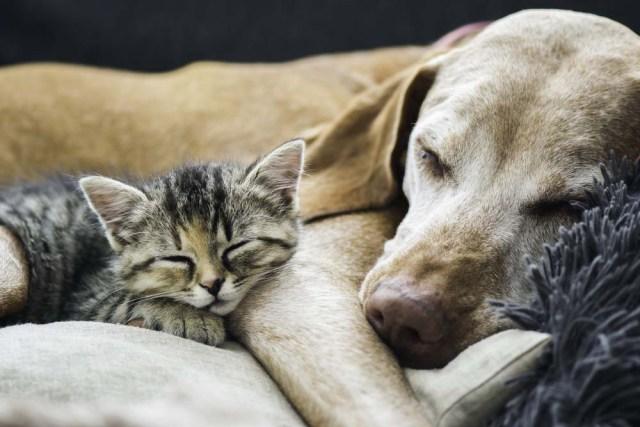 They sleep like a dream