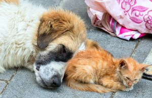 15 Mind-Blowing Facts About Pet Homelessness