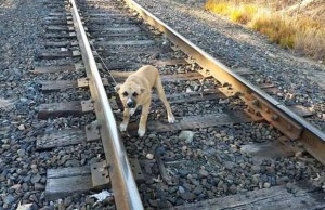 Dog Tied On Train Tracks Escapes Death After Man Saves Him