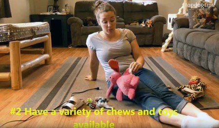 Have different puppy toys available to prevent chewing everything