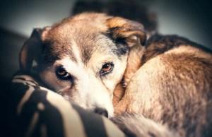 How to Improve Your Dog's Sleep