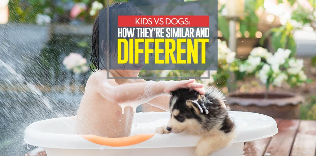 Kids vs Dogs - Differences and Similarities of Raising Children and Dogs