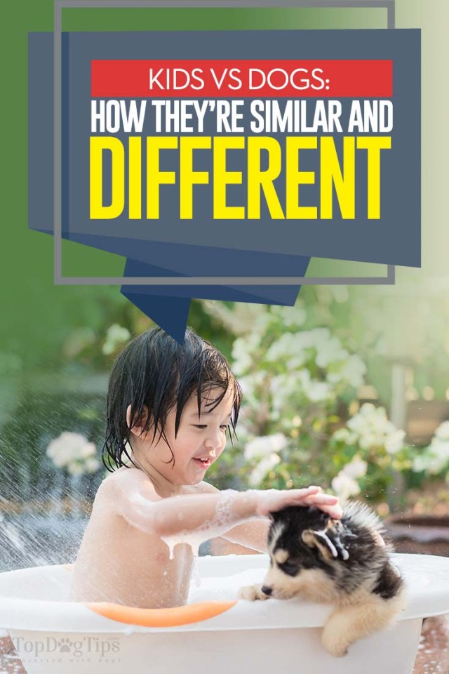 Kids vs Dogs - The Differences and Similarities of Raising Children and Dogs