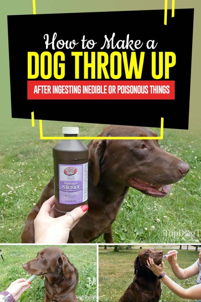 Tips on How to Make a Dog Throw Up