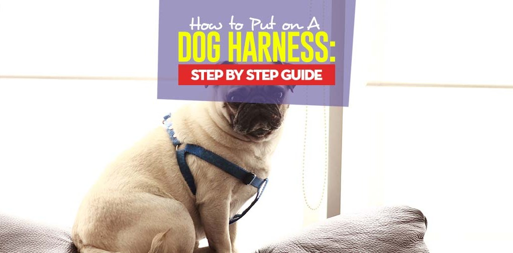Tips on How to Put on a Dog Harness