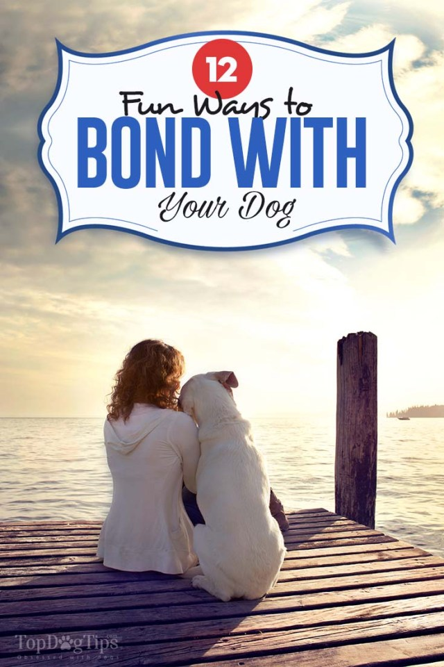 12 Fun Ways to Bond with Your Dog