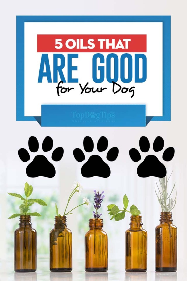 5 Oils That are Good for Your Dog