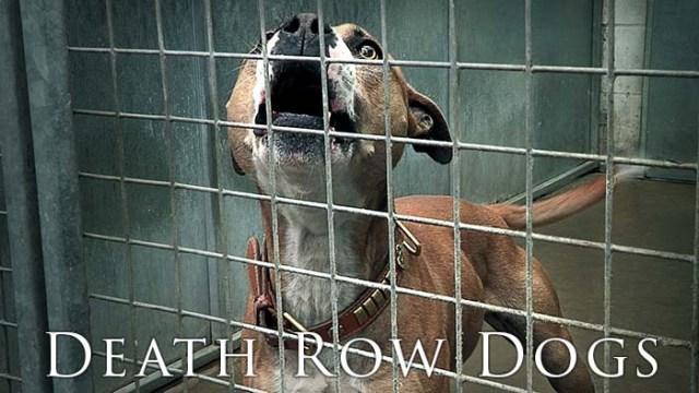 Death Row Dogs dog documentary