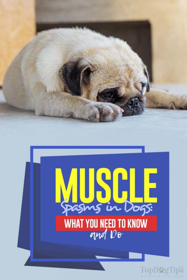 Dog Muscle Spasms What You Need to Know (and Do)