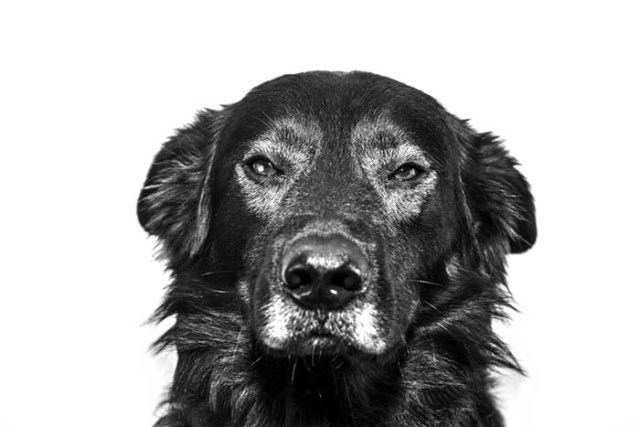 Dogs sense when you don't like someone
