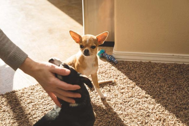 Dogs sense when you're favoring one pet over the other