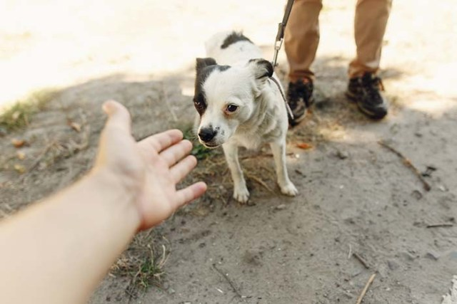 Dogs sense when you're fearful or under stress
