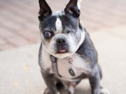 Glaucoma in Dogs - The Pet Owner's Guide