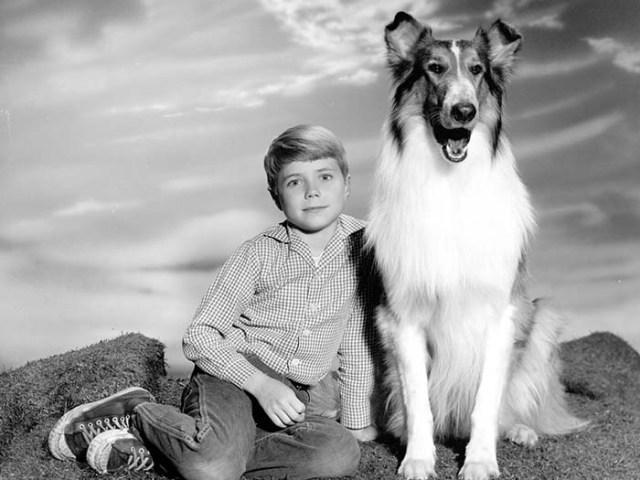 Lassie the Rough Collie