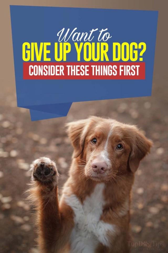 Reasons for Returning Dog to Shelter
