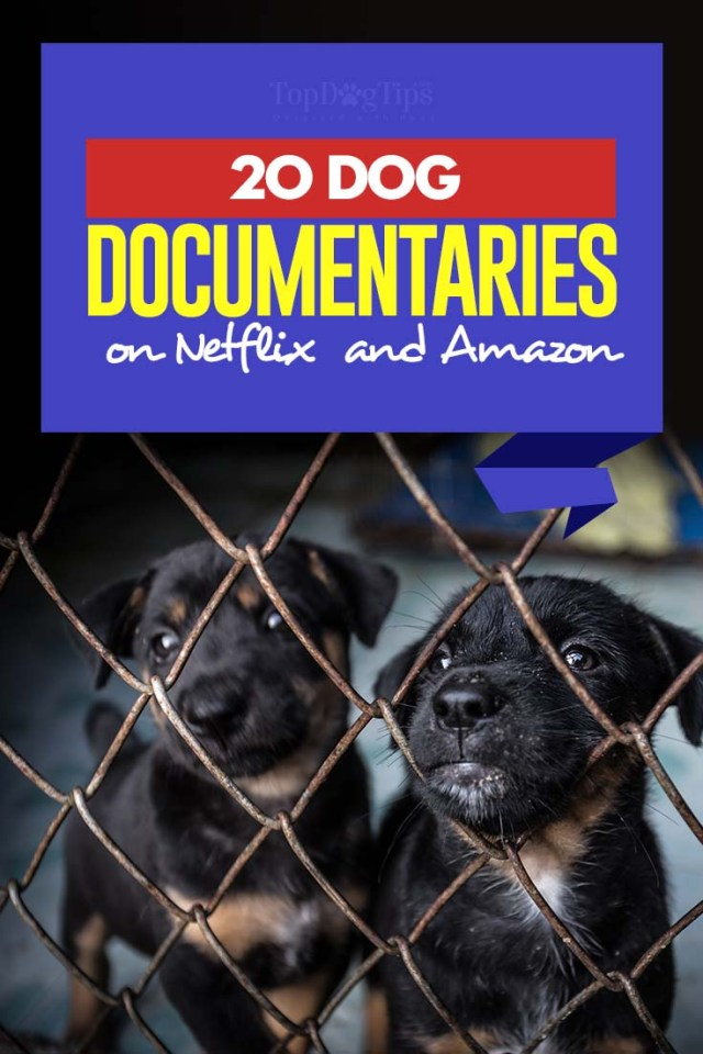 The 20 Dog Documentaries on Netflix and Amazon