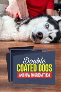 Los 39 perros de doble capa y cómo cuidarlos