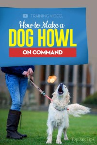 This is How to Make a Dog Howl on Command