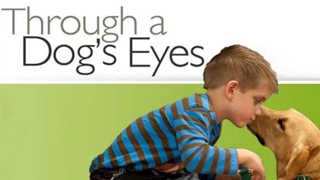 Through a Dogs Eyes dog documentary